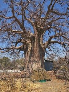 Campen untern Baobob-Baum